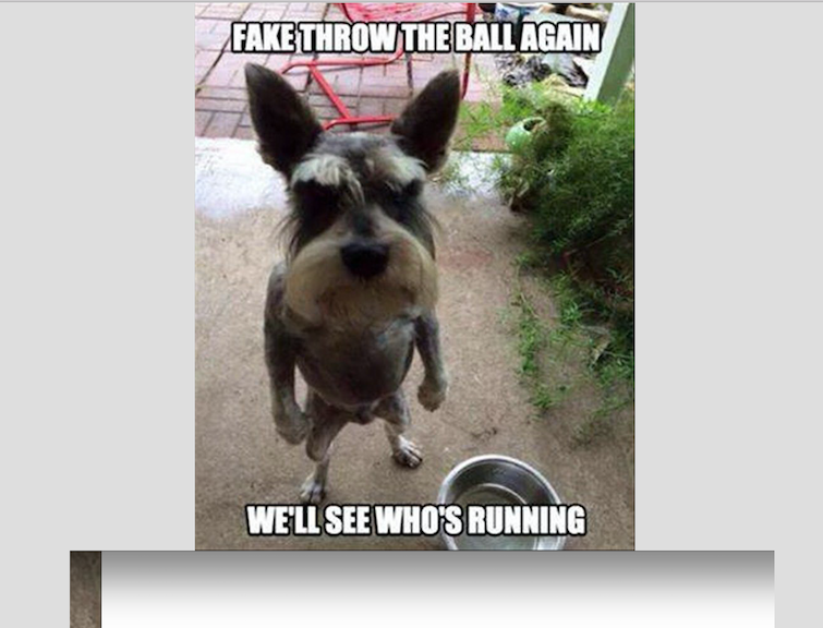 "A small dog standing on its hind legs with the words ""fake throw the ball again we'll see who's running"""